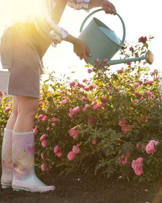 Spring & Summer Outdoor Plants