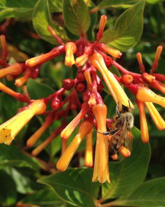 Bee Attracting Plants