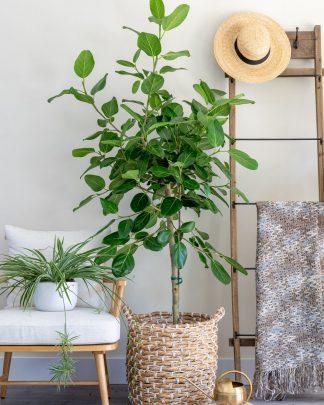 House Plants / Indoor / Interior