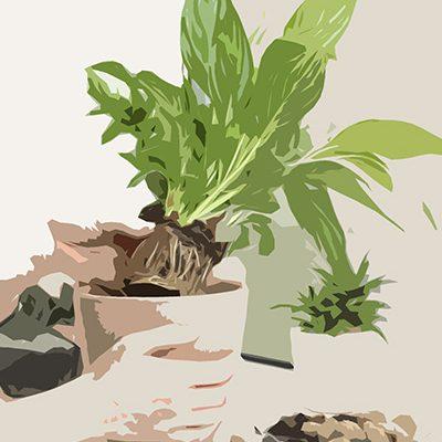 Plant Your Plant