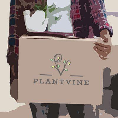 PlantVine Unboxing Your Plant Order